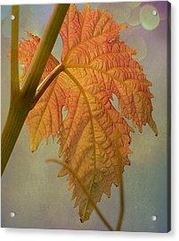 Autumn Grapevine Acrylic Print by Fraida Gutovich