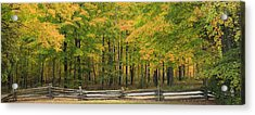 Autumn In Door County Acrylic Print by Adam Romanowicz