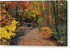 Autumn In Full Bloom Acrylic Print by Frozen in Time Fine Art Photography