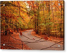 Autumn In Holmdel Park Acrylic Print by Angie Tirado