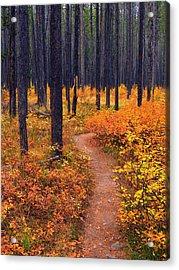 Autumn In Yellowstone Acrylic Print by Raymond Salani III