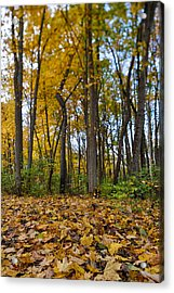 Autumn Is Here Acrylic Print by Sebastian Musial