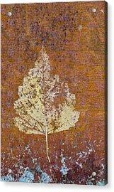 Autumn Leaf On Copper Acrylic Print by Carol Leigh