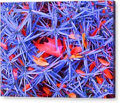 Autumn Leaves Among The Stars Acrylic Print by Ann Johndro-Collins