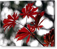 Autumn Leaves Acrylic Print by JianGang Wang