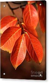 Autumn Leaves Acrylic Print by Joy Watson