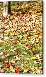 Autumn Leaves Acrylic Print by Les Cunliffe