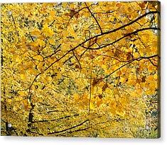 Autumn Leaves Acrylic Print by Michal Boubin