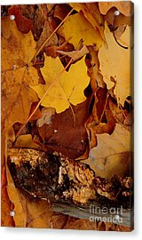 Autumn Leaves Of Yellow And Brown Acrylic Print by ImagesAsArt Photos And Graphics