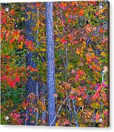 Autumn Leaves Acrylic Print by Scott Cameron