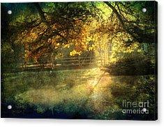 Autumn Light Acrylic Print by Ellen Cotton