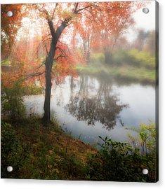Autumn Maple Tree Acrylic Print by Bill Wakeley