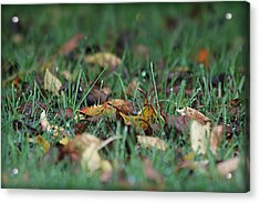 Autumn Morning Acrylic Print by Katie Wing Vigil