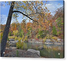 Autumn Oak And Hickory Forest Acrylic Print by Tim Fitzharris