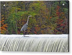 Autumn On The Maumee Acrylic Print by Cathy Cooley