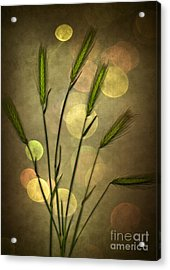 Autumn Party Acrylic Print by Jan Bickerton