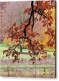 Autumn Rainbow Acrylic Print by Todd Sherlock