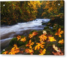 Autumn Returns Acrylic Print by Darren  White