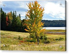 Autumn Shores Of Maine Acrylic Print by Lena Hatch
