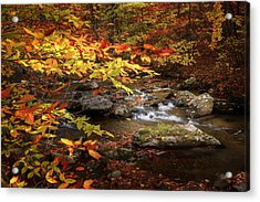 Autumn Stream Acrylic Print by Bill Wakeley