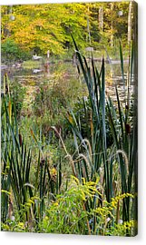 Autumn Swamp Acrylic Print by Bill Wakeley