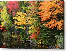 Autumn Trees, Sheepscot River, Palermo Acrylic Print by Michel Hersen