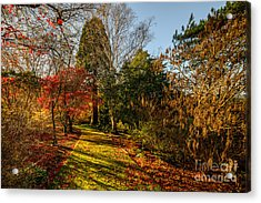 Autumnal Forest Acrylic Print by Adrian Evans