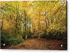 Autumnal Woodland I Acrylic Print by Natalie Kinnear