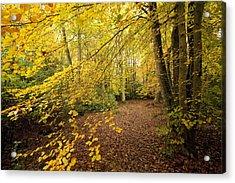 Autumnal Woodland II Acrylic Print by Natalie Kinnear