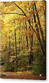 Autumnal Woodland Iv Acrylic Print by Natalie Kinnear
