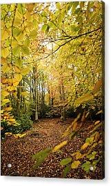 Autumnal Woodland V Acrylic Print by Natalie Kinnear