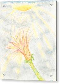 Awakening Acrylic Print by Kim Sy Ok
