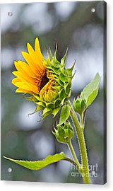 Awe What The Heck Acrylic Print by Gwyn Newcombe