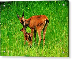 Aww Mom Acrylic Print by Benjamin Yeager