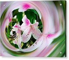 Azalea Swirl Acrylic Print by Penny Lisowski