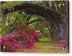 Azaleas And Oaks Acrylic Print by Mike Lang