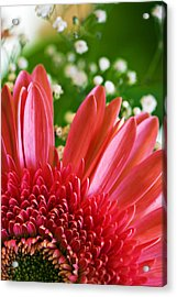 Babies Breath And Gerber Daisy Acrylic Print by Marilyn Hunt