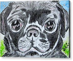 Baby Black Pug Acrylic Print by Kathy Marrs Chandler