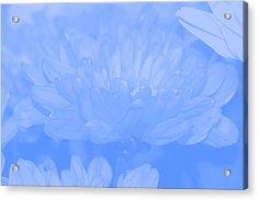 Baby Blue 1 Acrylic Print by Carol Lynch