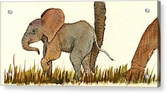 Baby Elephant Acrylic Print by Juan  Bosco