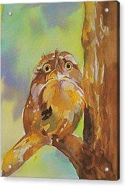 Baby Owl Acrylic Print by Reveille Kennedy