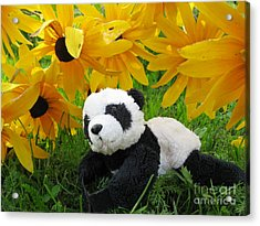 Baby Panda Under The Golden Sky Acrylic Print by Ausra Huntington nee Paulauskaite
