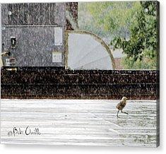 Baby Seagull Running In The Rain Acrylic Print by Bob Orsillo