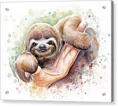 Baby Sloth Watercolor Acrylic Print by Olga Shvartsur