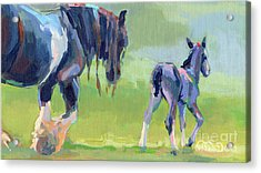 Baby Steps Acrylic Print by Kimberly Santini