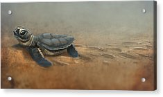 Baby Turtle Acrylic Print by Aaron Blaise