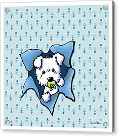 Baby Westie Blast Acrylic Print by Kim Niles