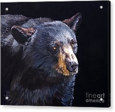 Back In Black Bear Acrylic Print by J W Baker