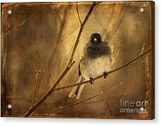 Backlit Birdie Being Buffeted  Acrylic Print by Lois Bryan