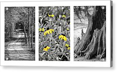 Backwoods Escape Triptych Acrylic Print by Carolyn Marshall